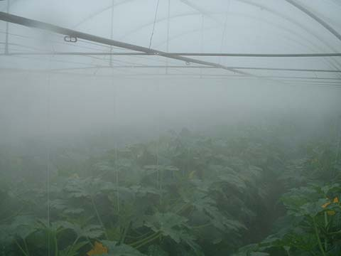 greenhouse-cooling1