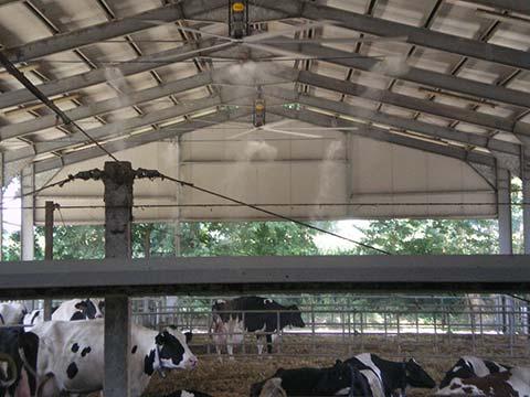 livestock-cooling5