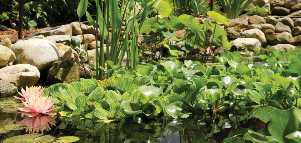 watergarden (1)